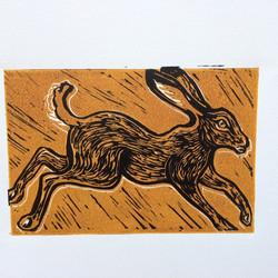 Hemingford Hare