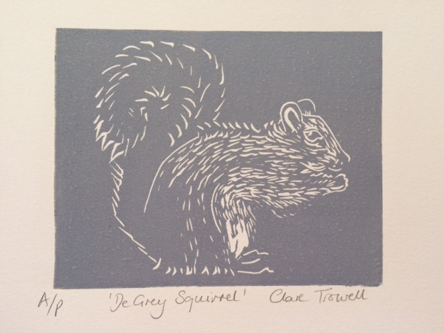 De Grey Squirrel