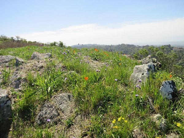 high ridge meadow on barberry.jpg