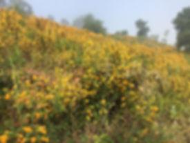 monkey flower skyline trail.jpeg