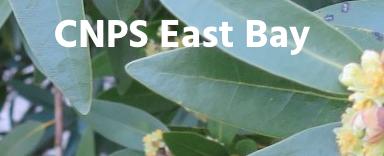 EBCNPS.png