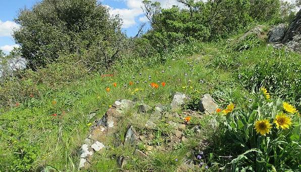 intact meadow on barberry peak.jpg