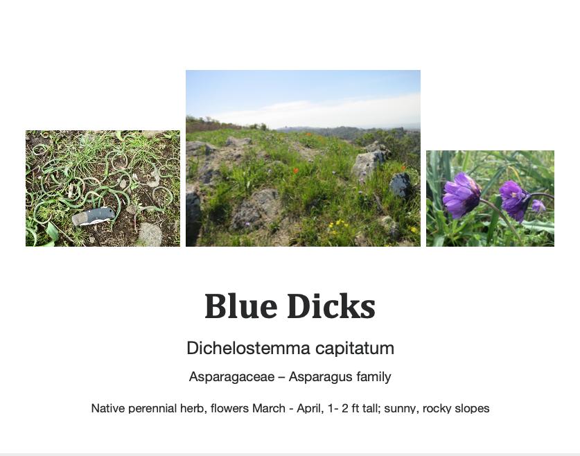Blue dicks flashcard.png