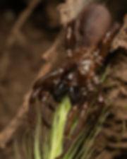 tube spider.jpg
