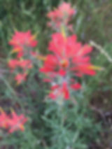 medium red.jpeg