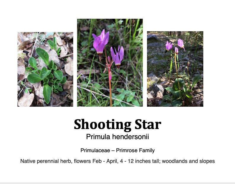 SHooting star flashcard.png