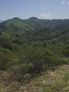 view to orinda past chaparral.jpeg