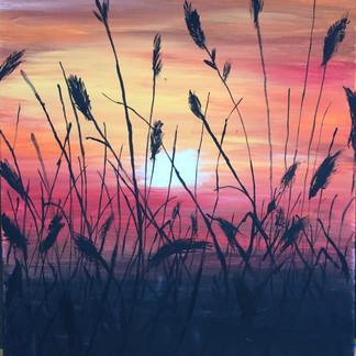 Allie Hanson's Fields