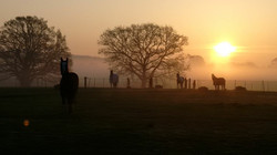 1.paddocks sun rise.JPG