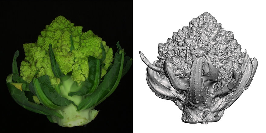 Romanesco-3D-scan with OpenScan Pi-combi