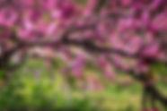 beautiful-blooming-branch-1047093.jpg