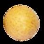 longan%20v6_edited.png