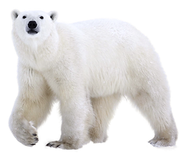polar%20bear_edited.png