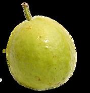 guava 1.png