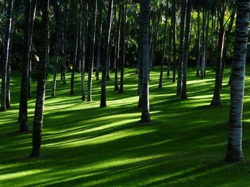 meadow-grass-palm-tree-forest-plenty-of-