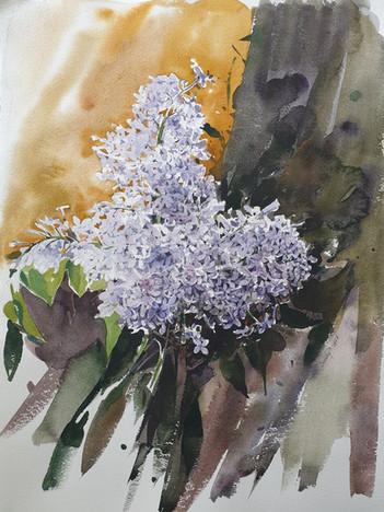 Çiçekler 23