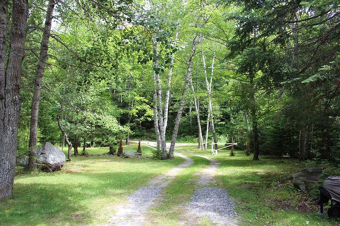 Driveway Pinetree