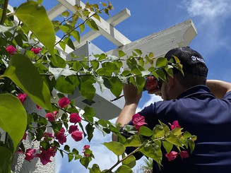 The best spot for a camera system is always behind the thorny bougainvillea.