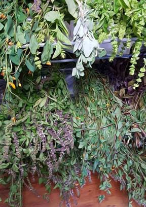 These herbs will be used in my conjure oils and magickal powders.