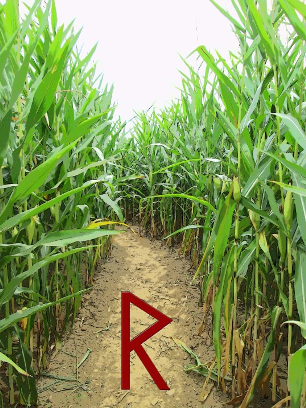 Sometimes, life feels like a corn maze where the walls of experience twist and turn, making it difficult to see the path ahead. Am I doing the right thing? Should I keep walking this way? Rad (Radio) is the Rune that helps us move forward in the right direction even though we are unsure of the way.