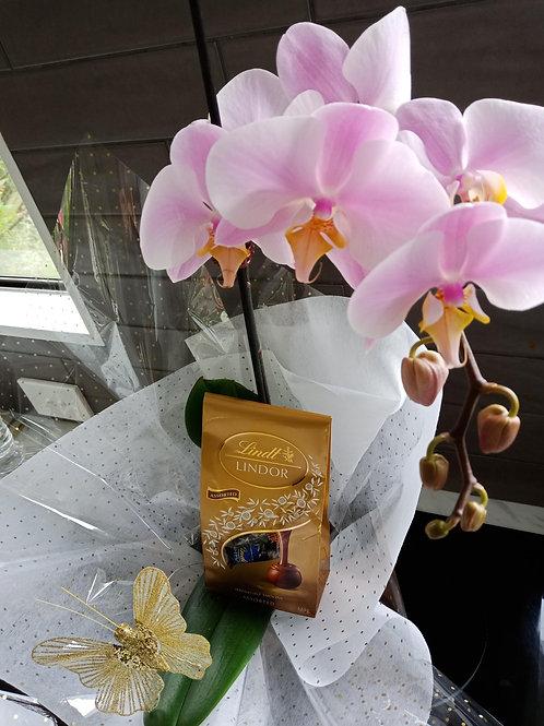 Orchids & Chocolates