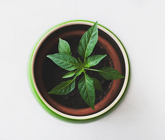 Plant in a Pot_edited.jpg