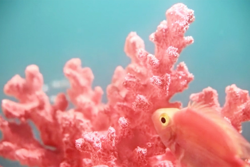 цвет-года-2019-pantone-living-coral