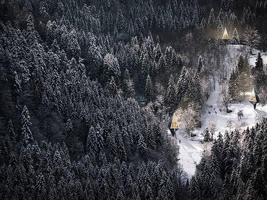 Лесной пригород и дома, похожие на деревья