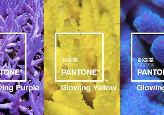 Pantone и 3 новых оттенка – реакция кораллов на изменение климата