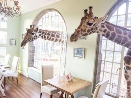Поместье с жирафами - это сюрреалистический отпуск вашей мечты