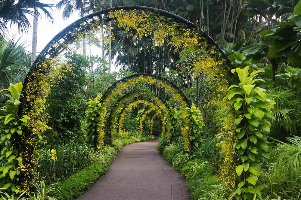 Singapore-Botanic-Gardens-Сингапур