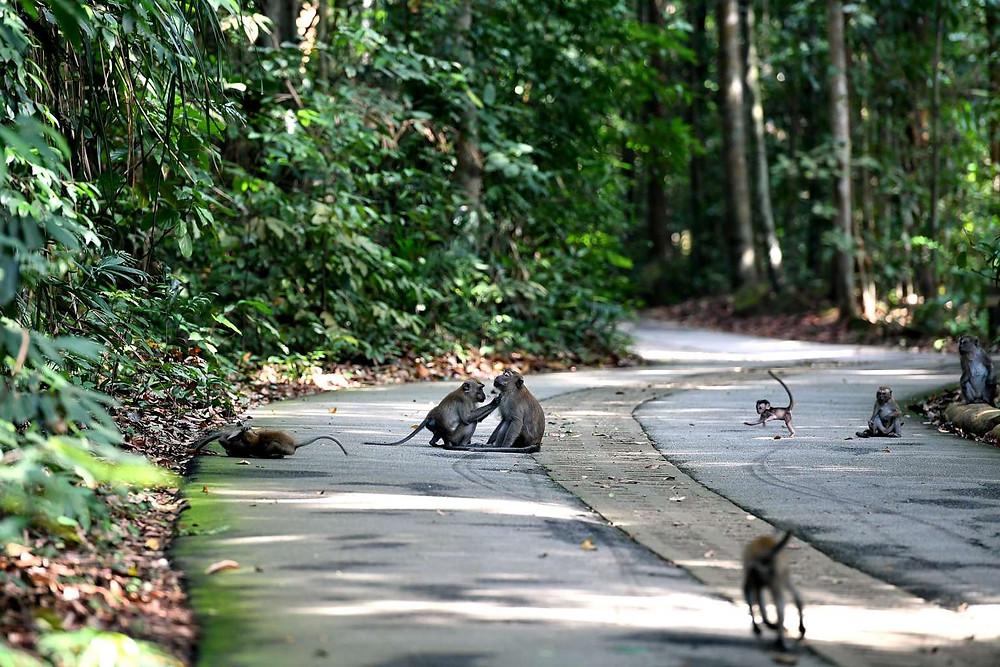 Bukit-Timan-Nature-Reserve-Сингапур