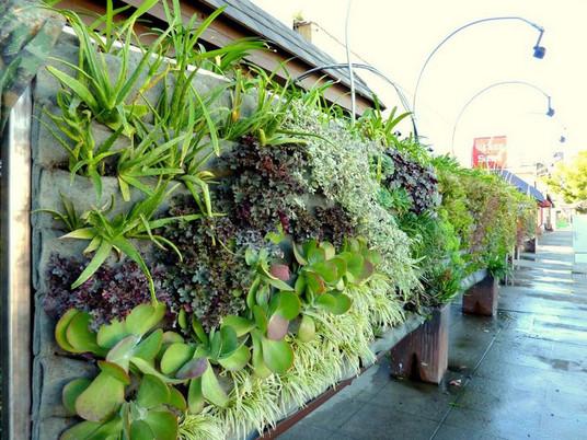 Вертикальный сад для небольших дворов и балконов