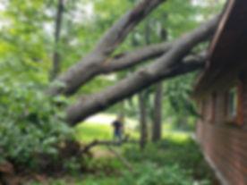 Tree Damage.jpg