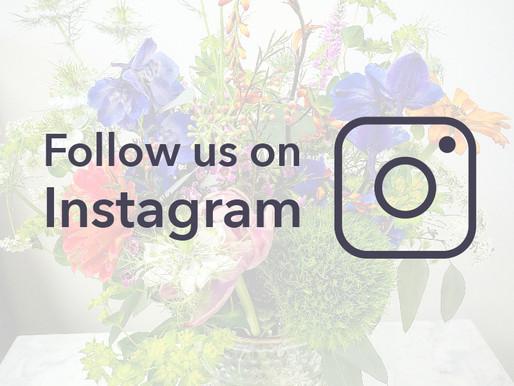 Wildflower is on Instagram!