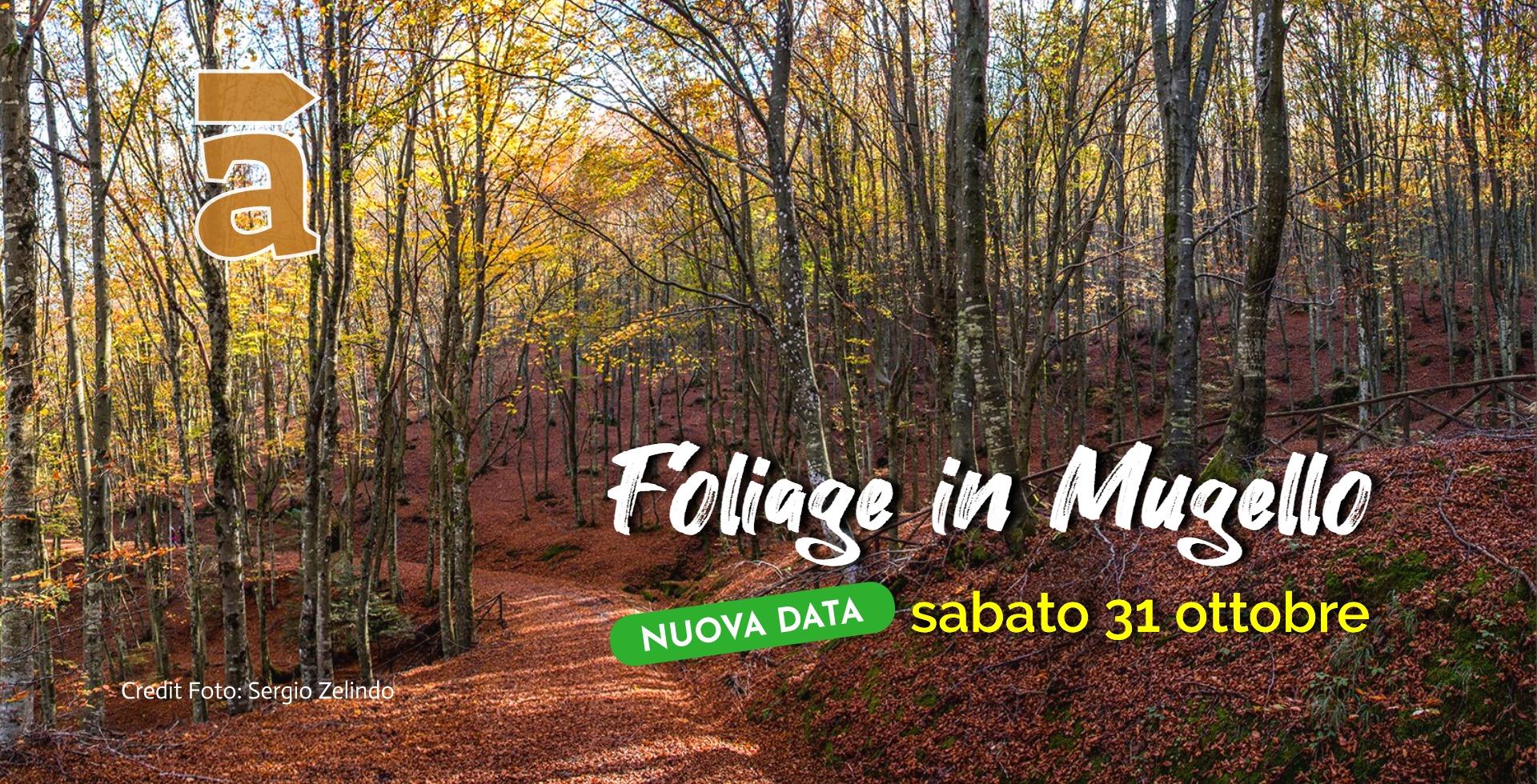 Foliage in Mugello_2020.jpg