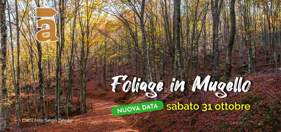 foliage-in-mugello_2020jpg