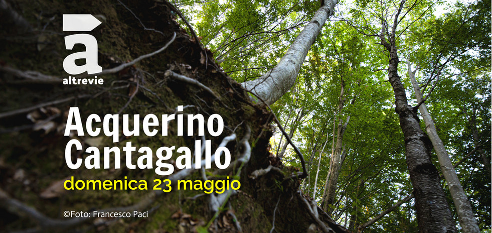 acquerinocantagallo_2020-1jpg