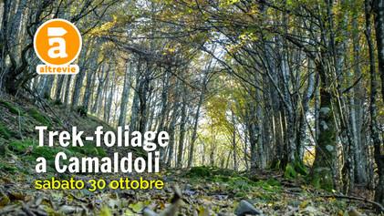 FoliageCamaldoli_2020%20(2).jpg