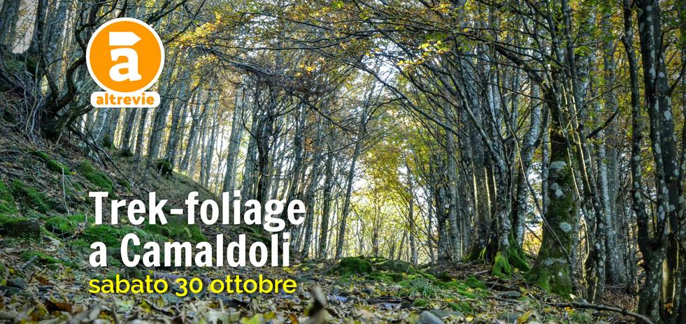 foliagecamaldoli_2020-2.jpg