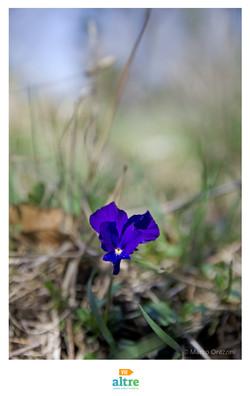 """Itinerario - """"La Violetta etrusca"""""""
