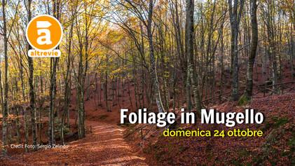 Foliage%20in%20Mugello_2021.jpg