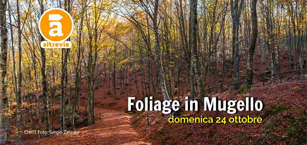 foliage-in-mugello_2021.jpg