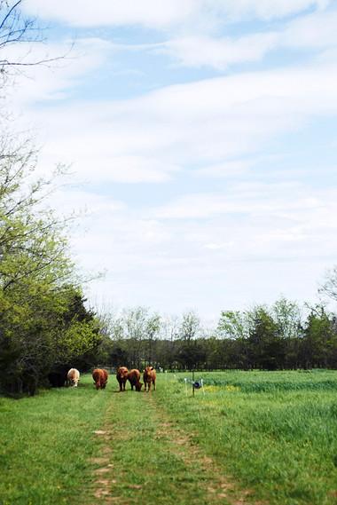 ROCKY GLADE FARM