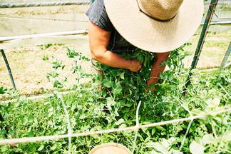 TURNBULL CREEK FARM