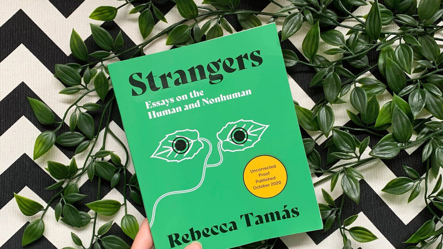 REVIEW: Strangers by Rebecca Tamás