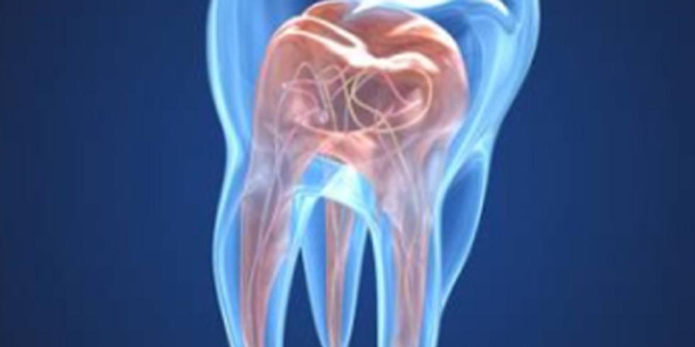 Désacraliser l'Endodontie