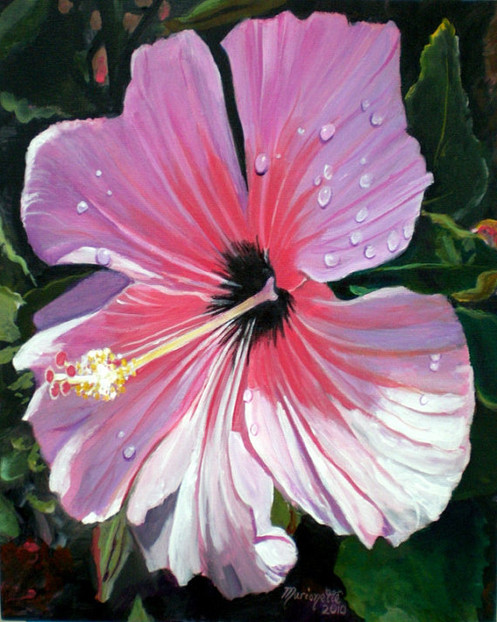 Pink Hibiscus With Rain Drops