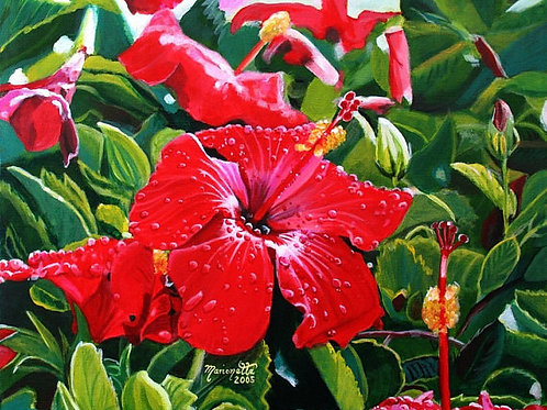 """Red Hibiscus with Hawaiian Snow"""