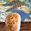 Thumbnail: French Vanilla - Sea Sponge Soap